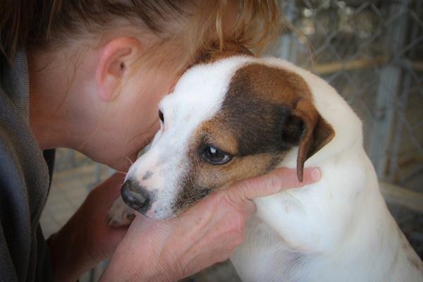 lorelee, jack russell terrier, fire survivor, flashpoint kennel, georgia