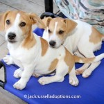 Jack and Jill, puppies for adoption