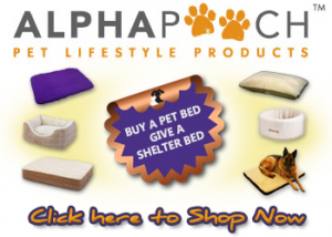 Donate a bed to a homeless Jack Russell by purchasing a bed at Alphapooch.