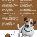 I Adopted Your Dog Today - Jack Russell Rescue