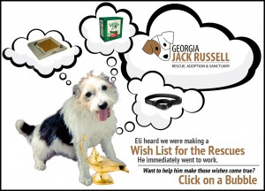 amazon-wish-list-jack-russell-rescue