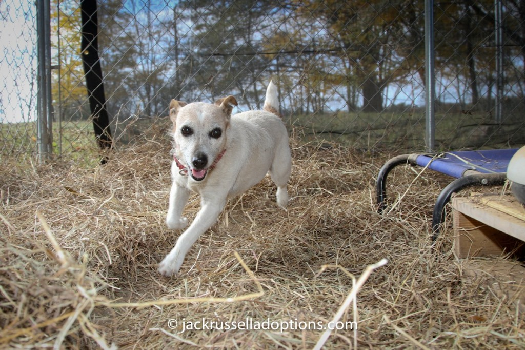 We know sweet Abigail is running circles at the Rainbow Bridge