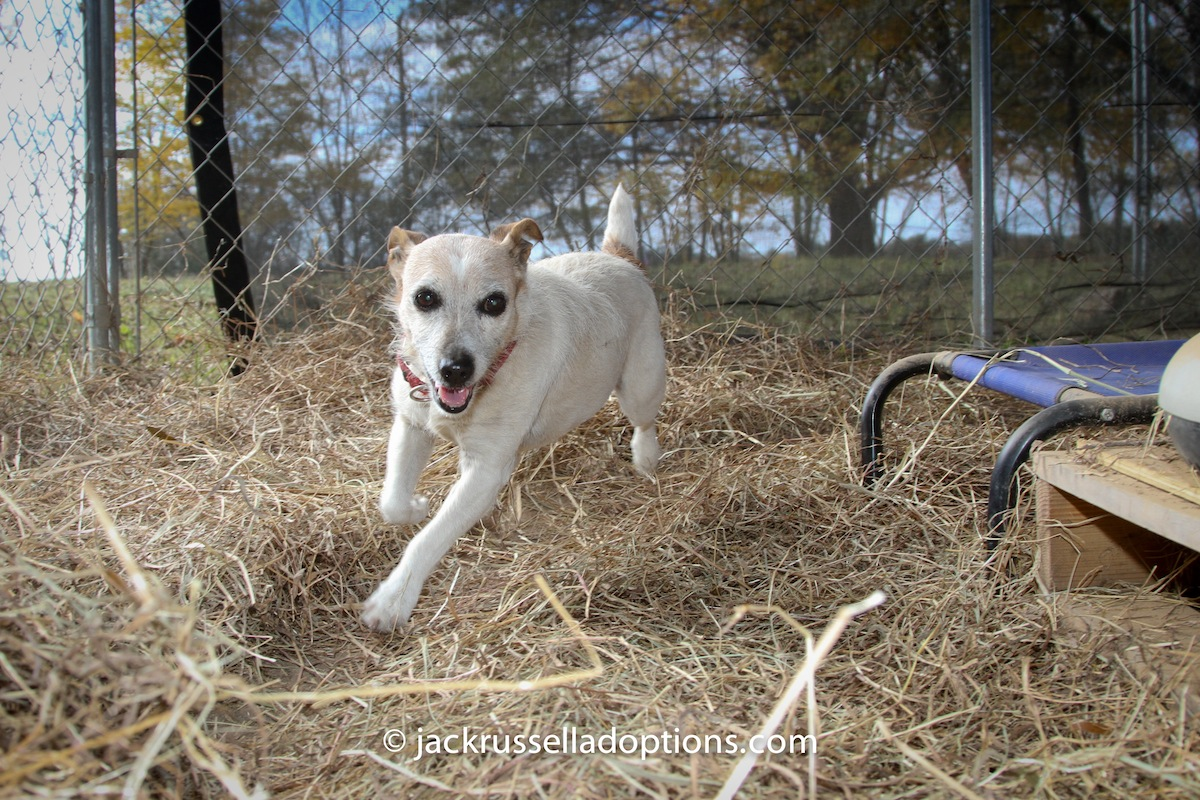 Big And Little Dog Ranch Rescue Review