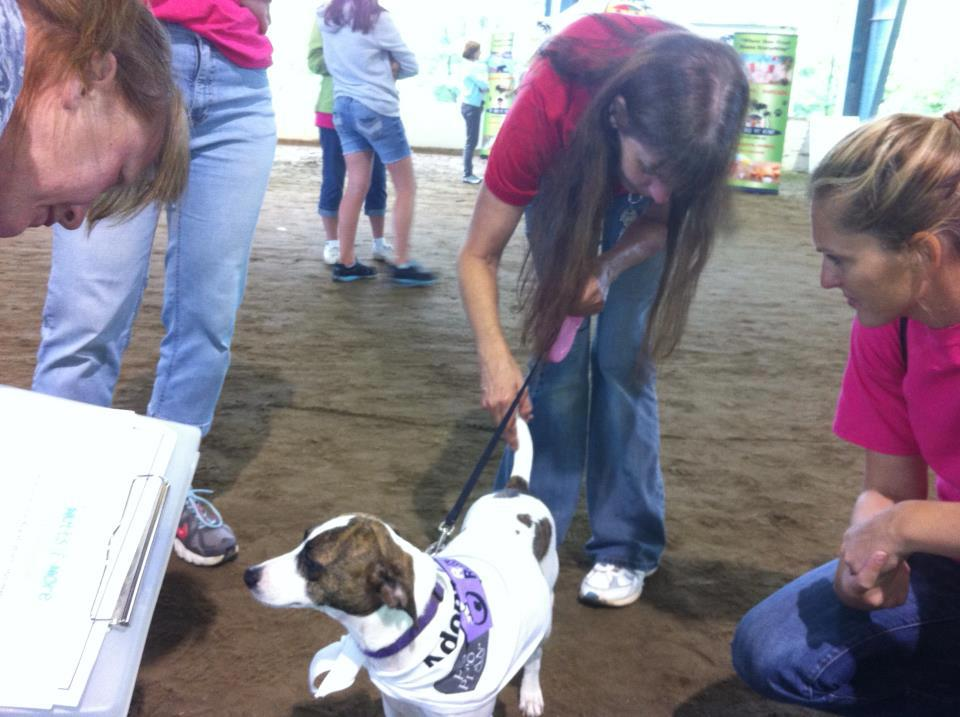 Suzie and Terri greeting visitors at the Animal Rescue Fair.