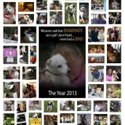 2013 Photo Collage of Rescue