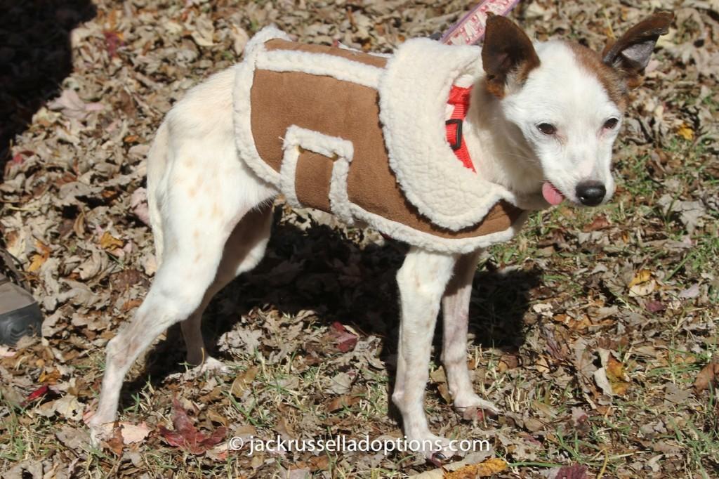 Chloe in her little jacket in November.