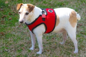 Chance needs a new home where he can be top dog ... and the only dog.