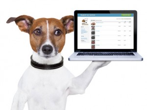 online-auction-jack-russell-fundraising