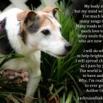 Senior Dog Tribute