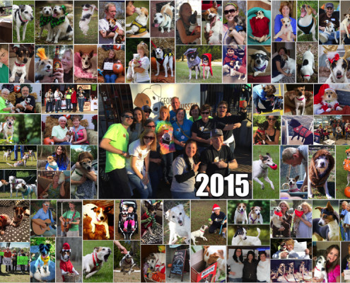 2015 Collage