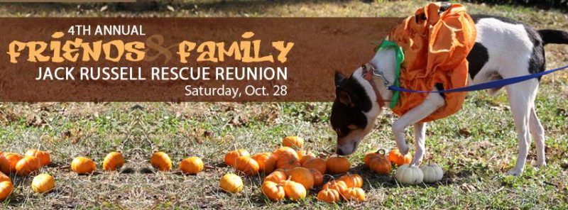4th Annual Jack Russell Reunion