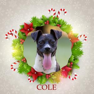Angel Tree - Cole