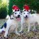 Mr and Mrs Santa Paws