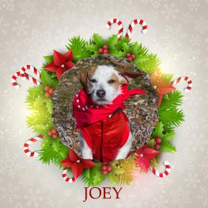 Angel Tree - Joey
