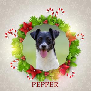 Angel Tree - Pepper