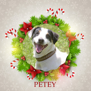 Angel Tree - Petey