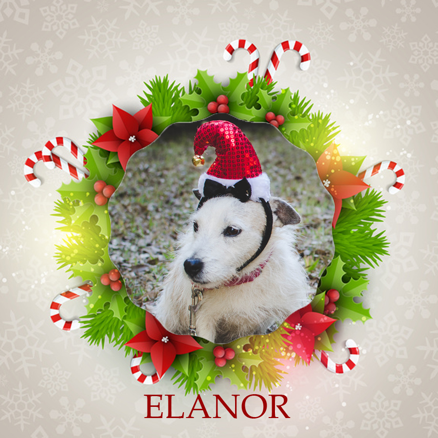 Angel Tree 2015 - Elanor