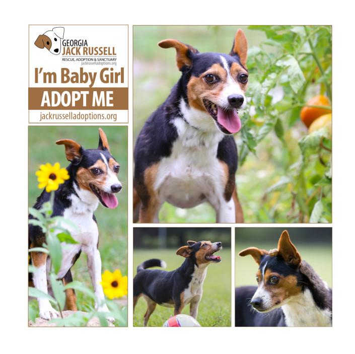 Adopt Baby Girl