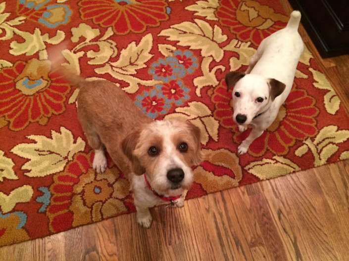 Buddy and Lily