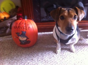 Chuckie and (another) Pumpkin