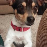 Daisy Mae hears food
