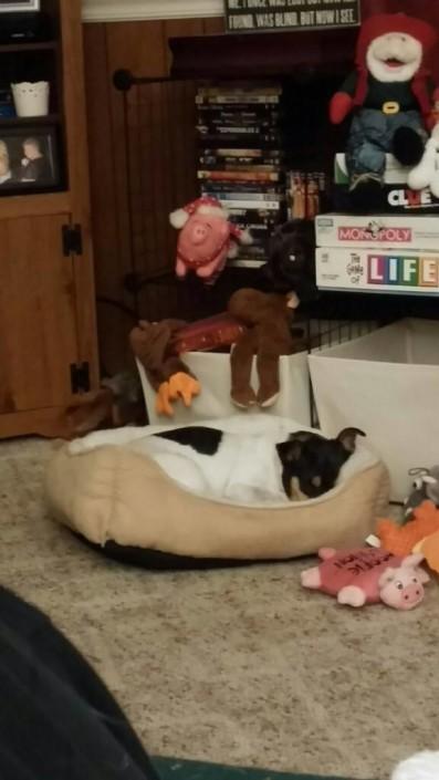Daisy Mae loves toys