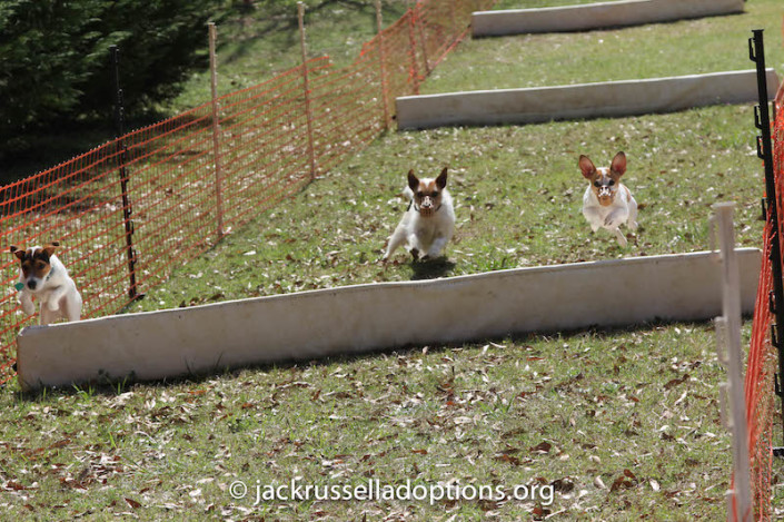 Kennedy's sister Belle (right) excelled at everything she tried yesterday! Diamond (middle) tried to catch up with her and Max, but she spent too much time trying to figure out how to get AROUND the first hurdle.