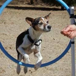 Dixie learning agility