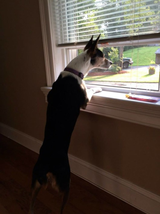 Dixie loving the window life!