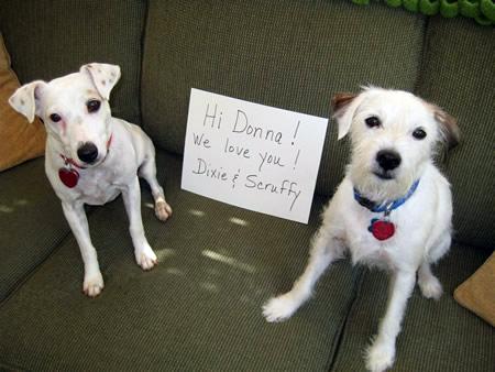 Dixie and Scruffy