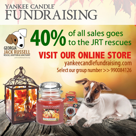 Yankee Candle Fundraiser for Jack Russell rescues