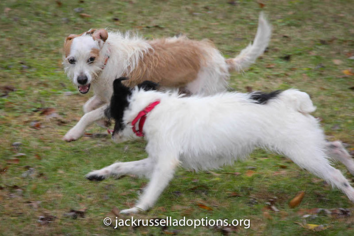 Joey and Nubbin Playing