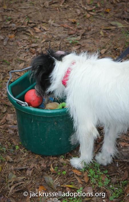 Nubbin finds toys