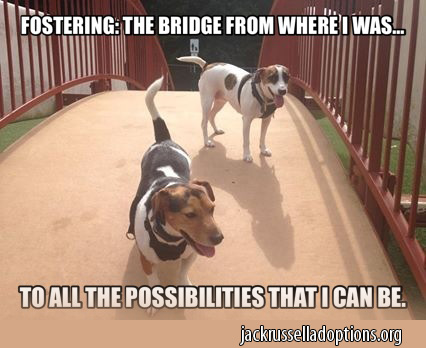 Fostering is the Bridge