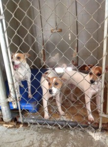 The Girls at the Kill Shelter