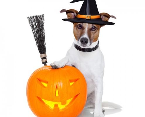Halloween Pet Costume Photo Contest