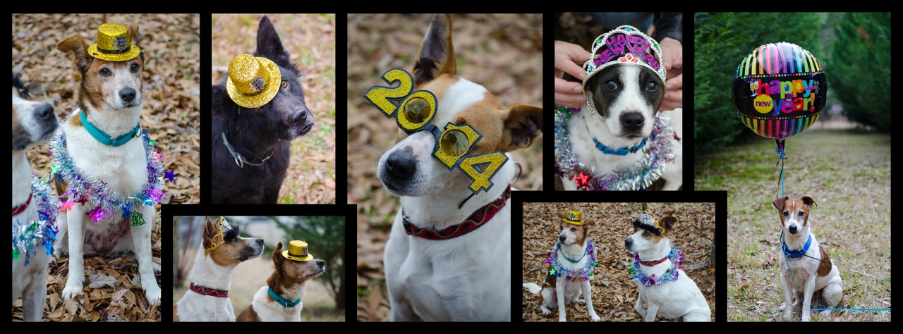 Happy New Year from Georgia Jack Russell Rescue!