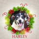 Angel Tree Harley