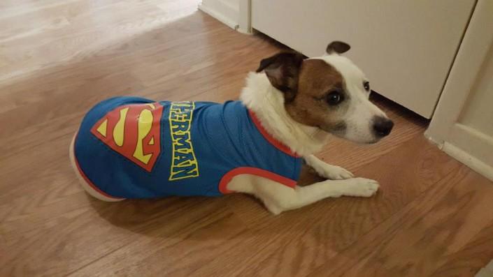 Hunter in Superman sweater