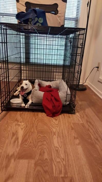 Hunter settling in new home