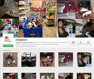 jrtadoptions on Instagram