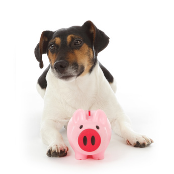 Jack Russell donations