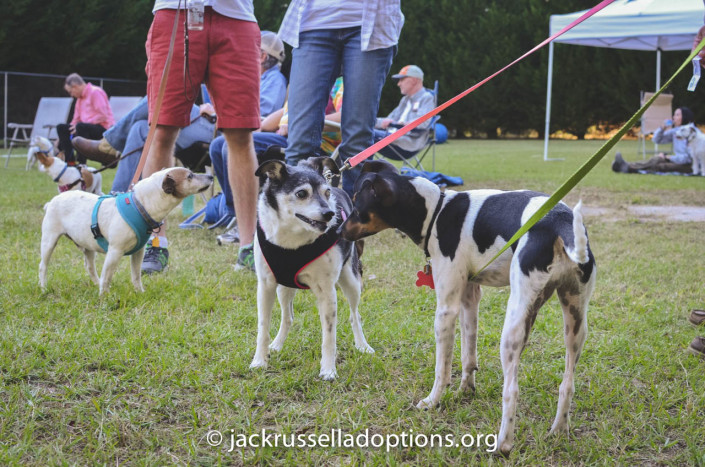 Cobb, Octavia and Boo at the JRT Reunion