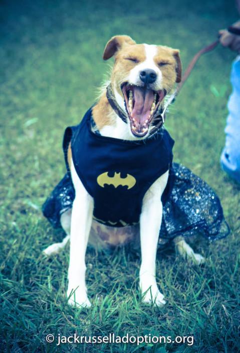 Pippa Batgirl