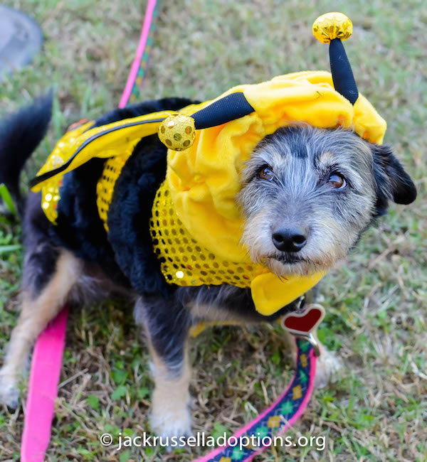 Susie the bee