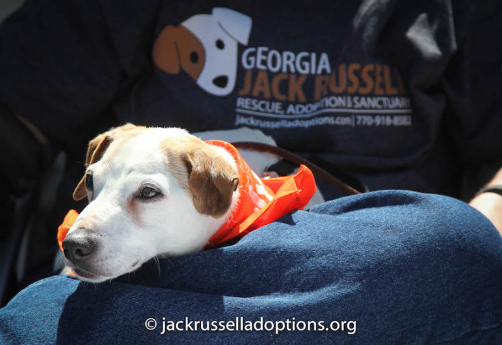 """""""Whew, it sure is exhausting being a rescue representative."""" But what a fabulous one you make, Kennedy!"""