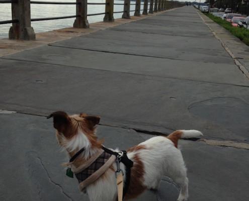 Landon exploring Charleston