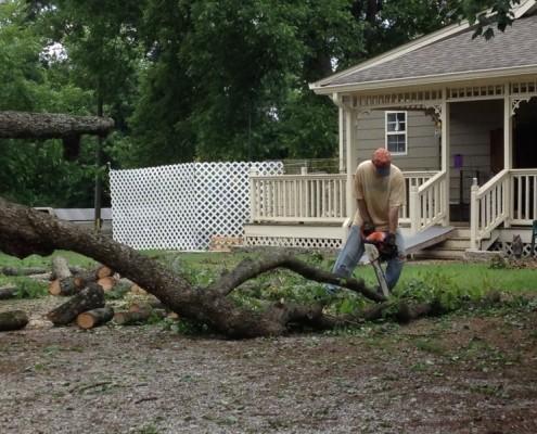 Lane Cutting Tree