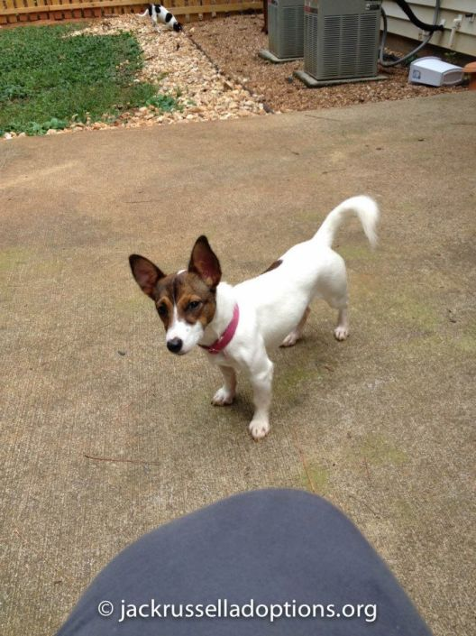 Lilly ready for adoption