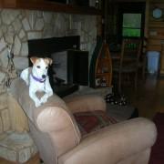 Maxie relaxing in cabin